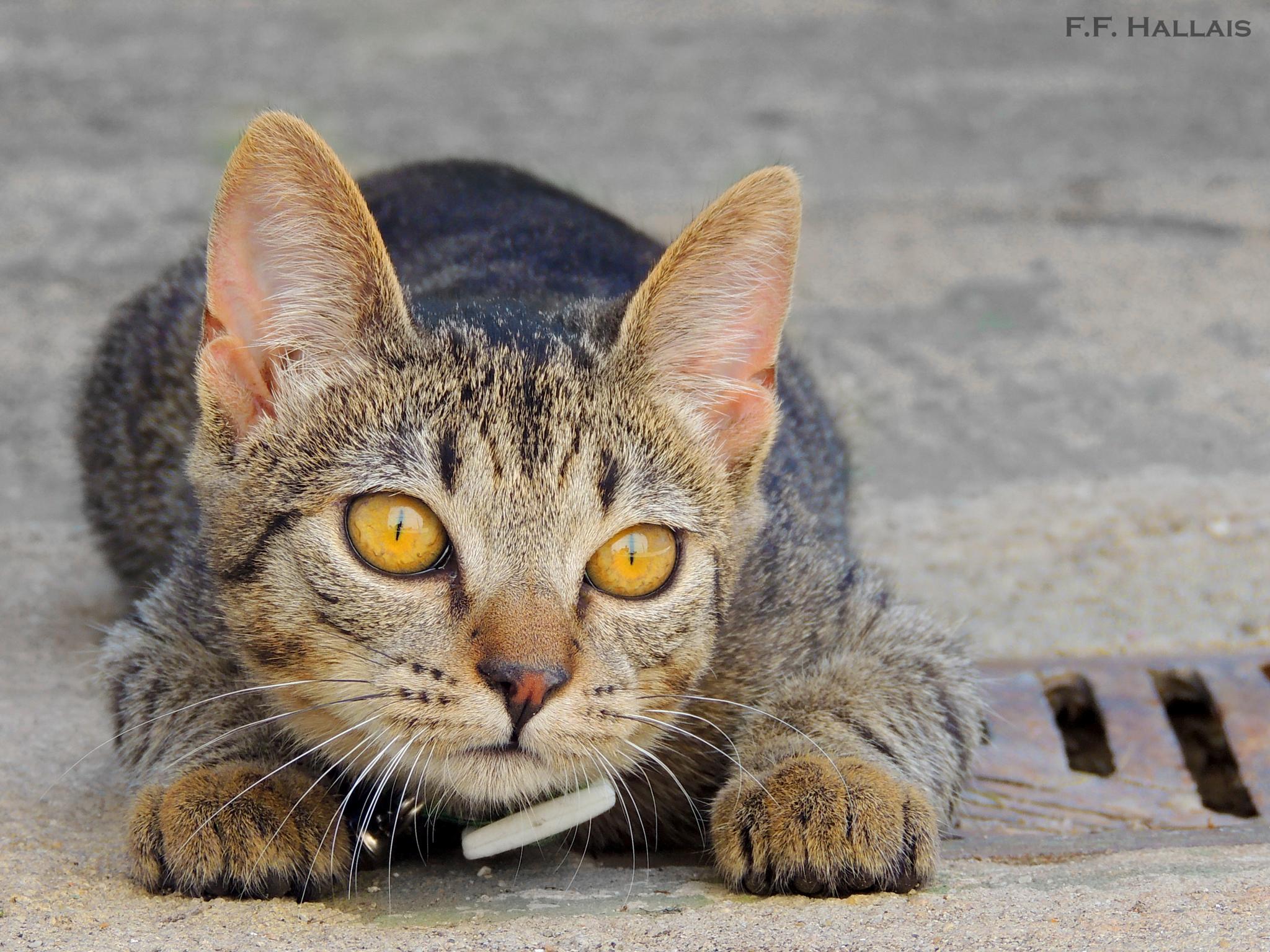 Fifi, my cat <3 by Fernanda França Reis