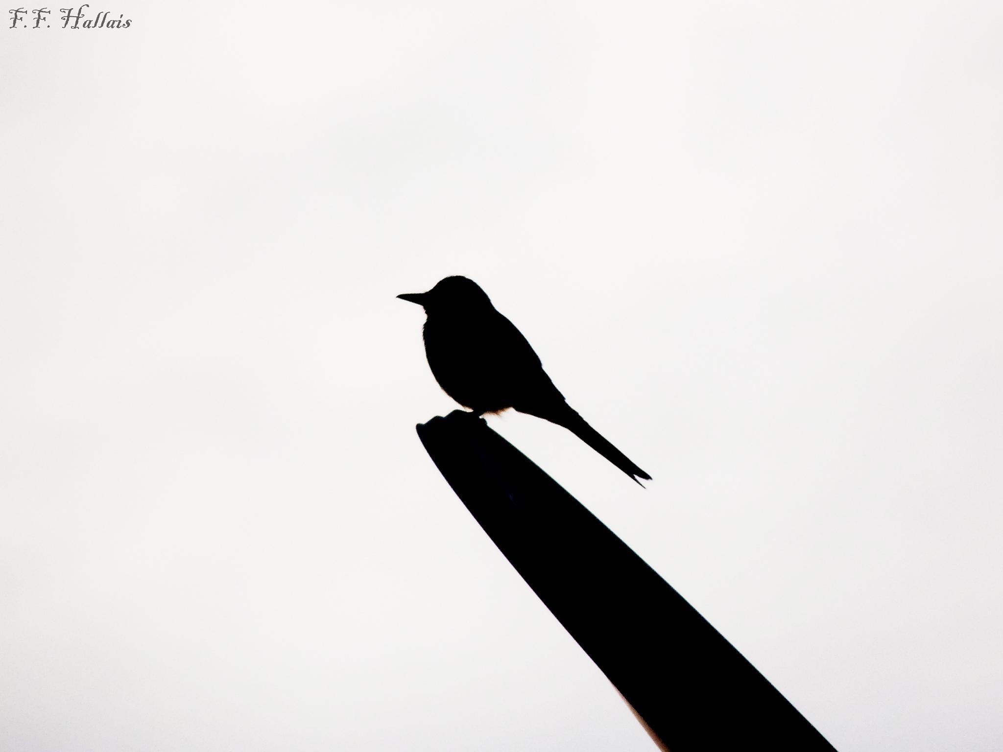 Birds by Fernanda França Reis