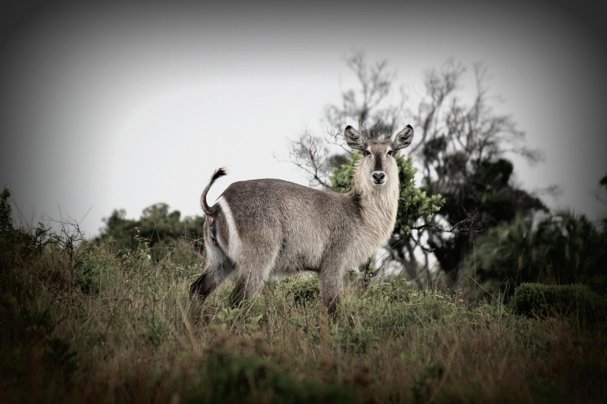 iSimangaliso Westland Park, Zuid-Afrika by selien.kimpe