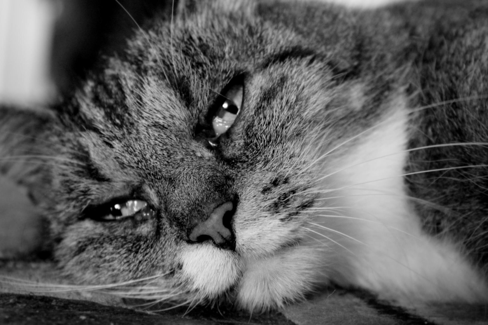 my old cat by selien.kimpe