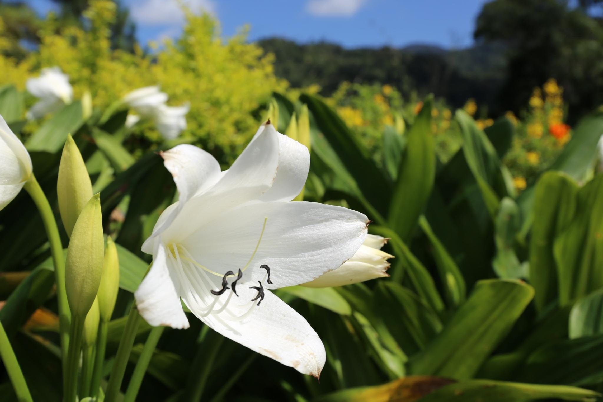 flower by impreza