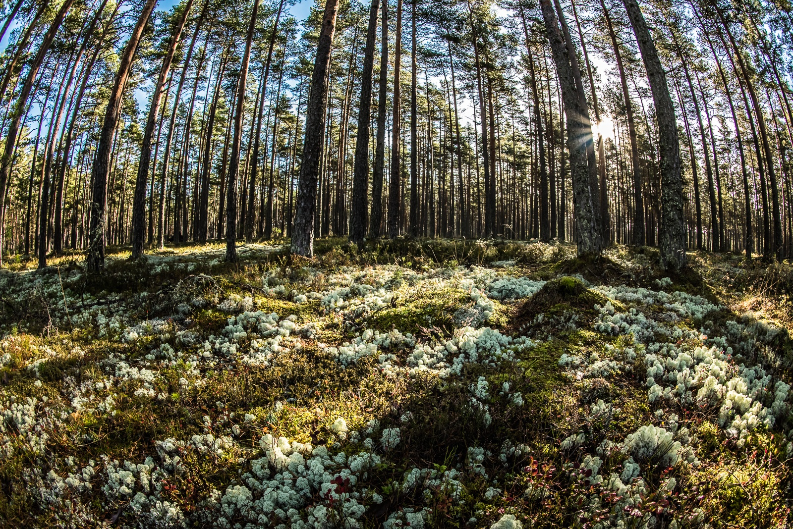 """untitled"" by Ole Vikshaaland"