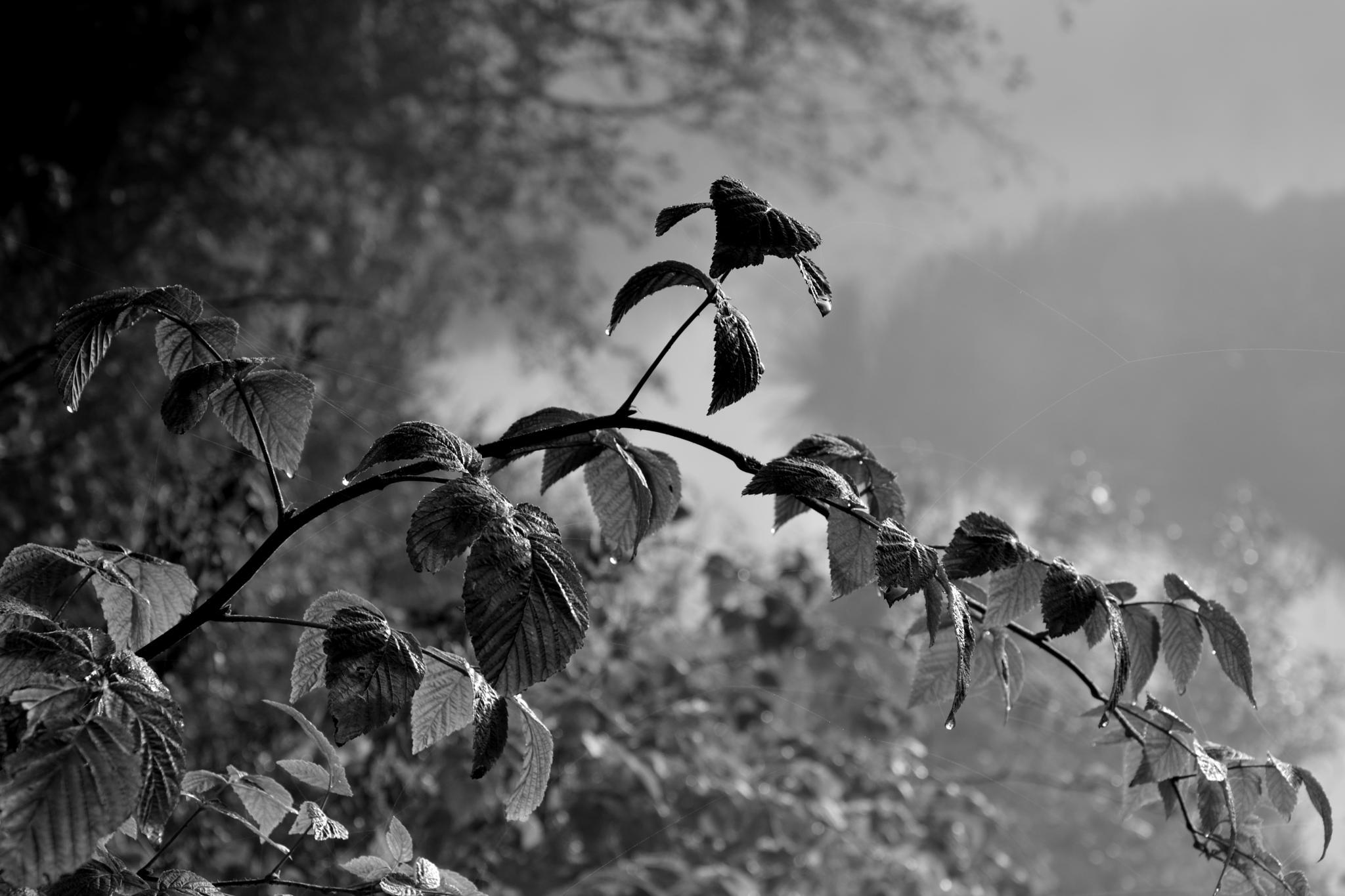 """Waiting the light"" by Ole Vikshaaland"