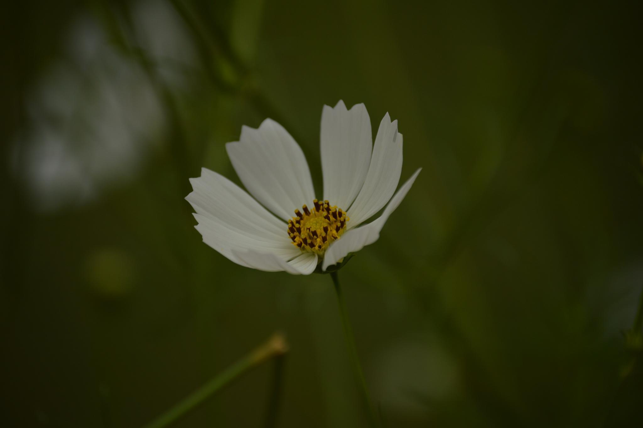 Flower by Rajmohan Pandian