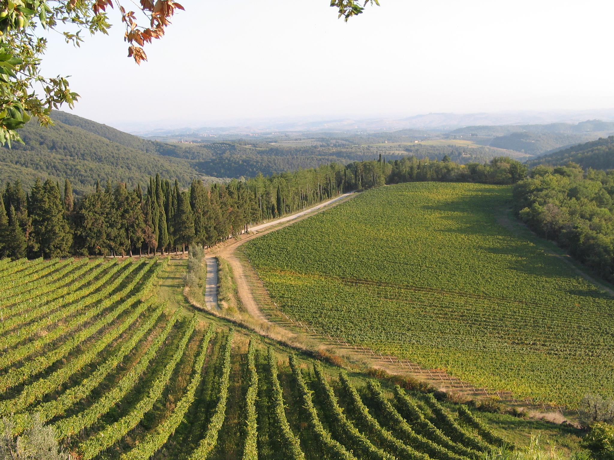 vineyard,toscana by doron