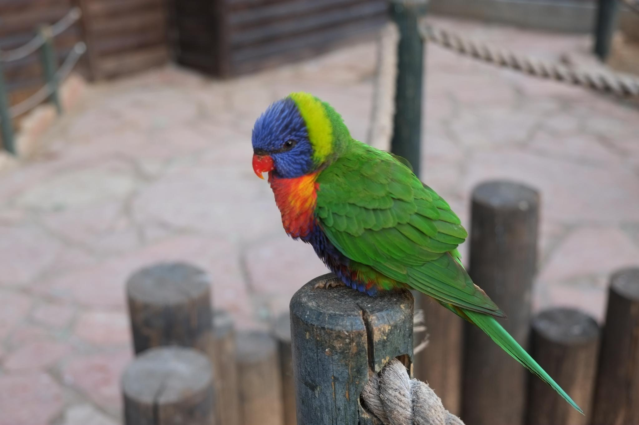 a parrot by doron