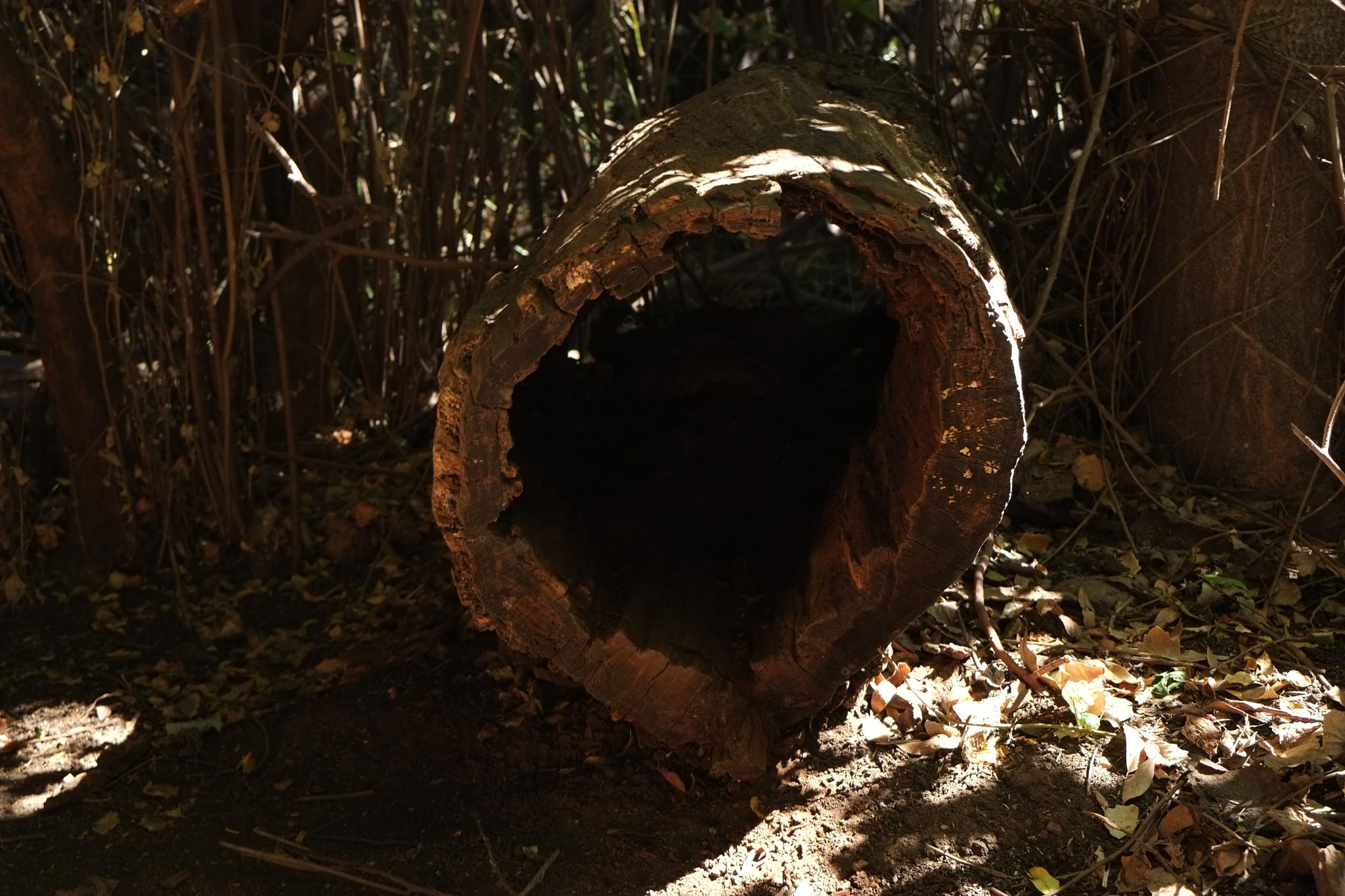 Hollow in (the wood) by doron