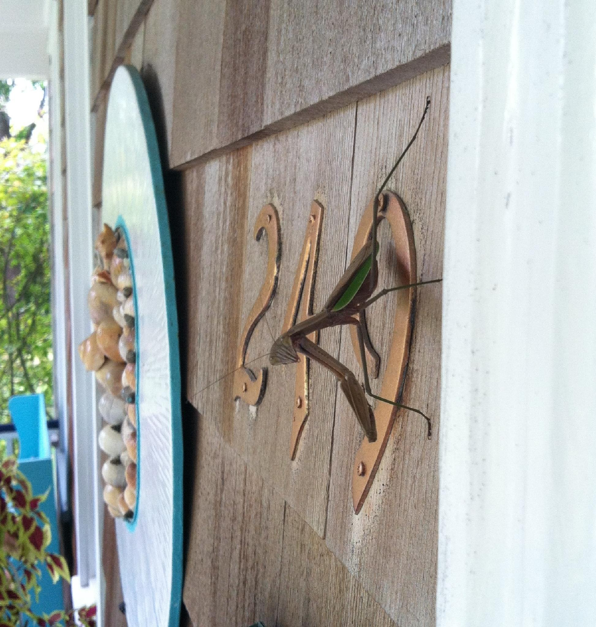 Mantis by Martha Sheehan