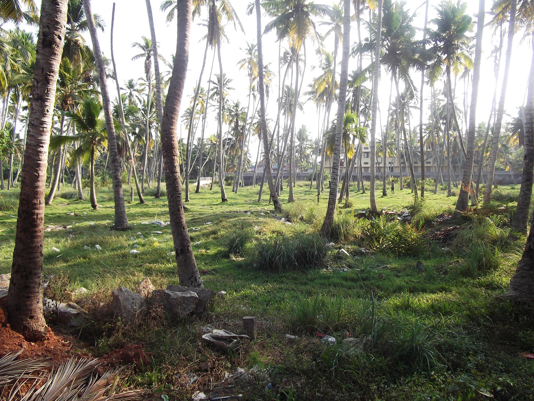 Nature by Jayakumar Y