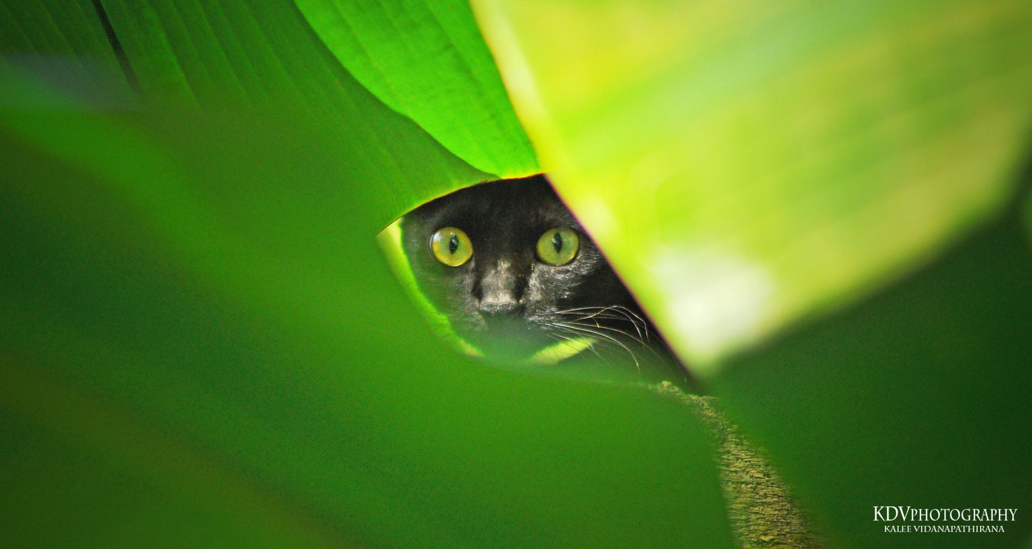 Staring into your soul by Kalee Vidanapathirana