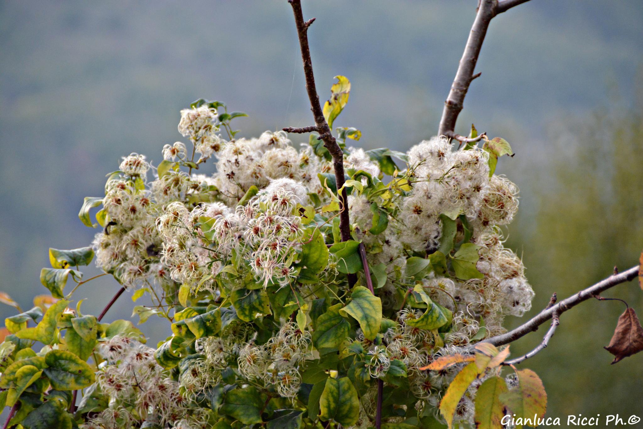 Photo in Nature #d7100 #autunno #italia