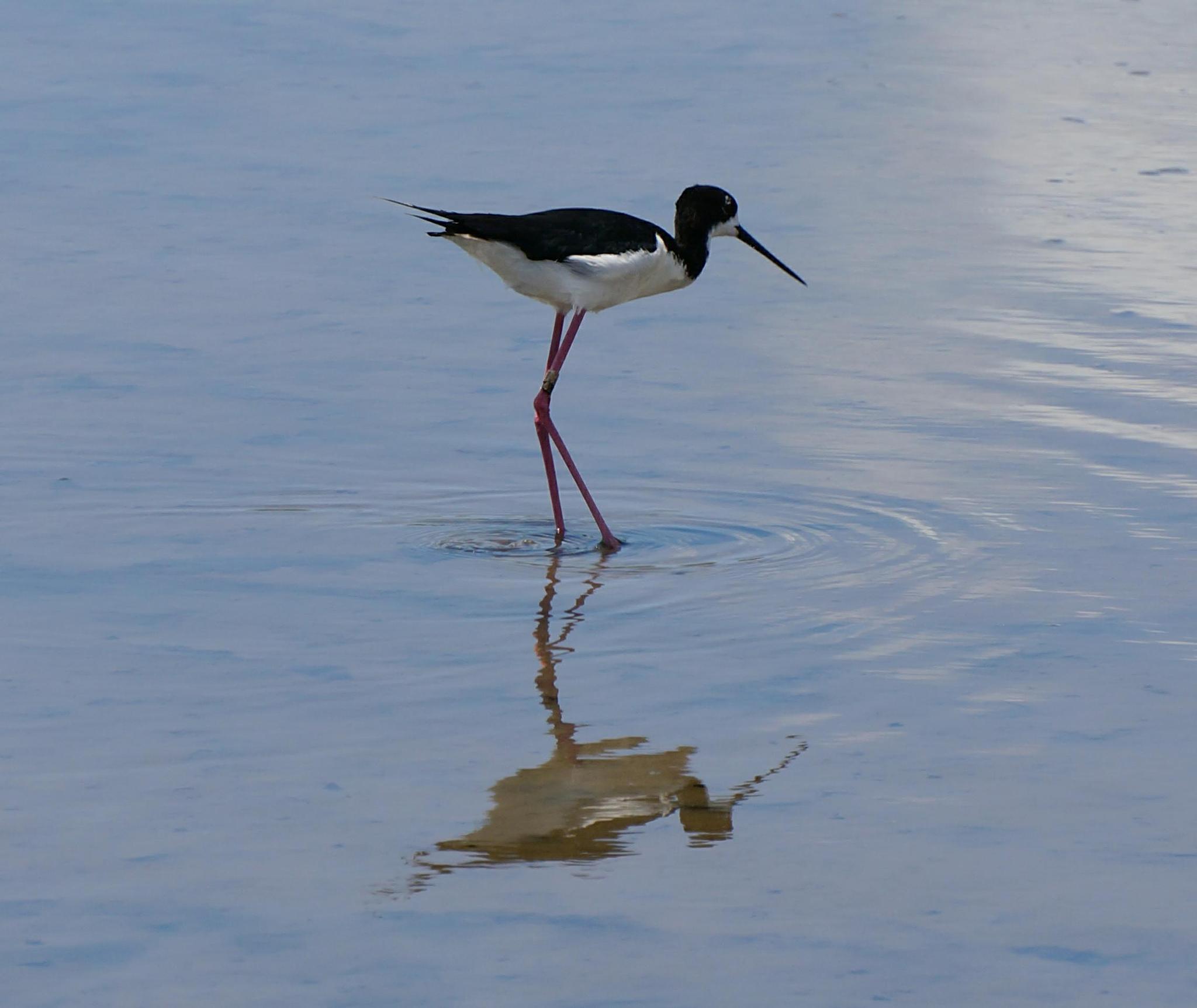Kealia Pond National Wildlife Refuge by tanukisan