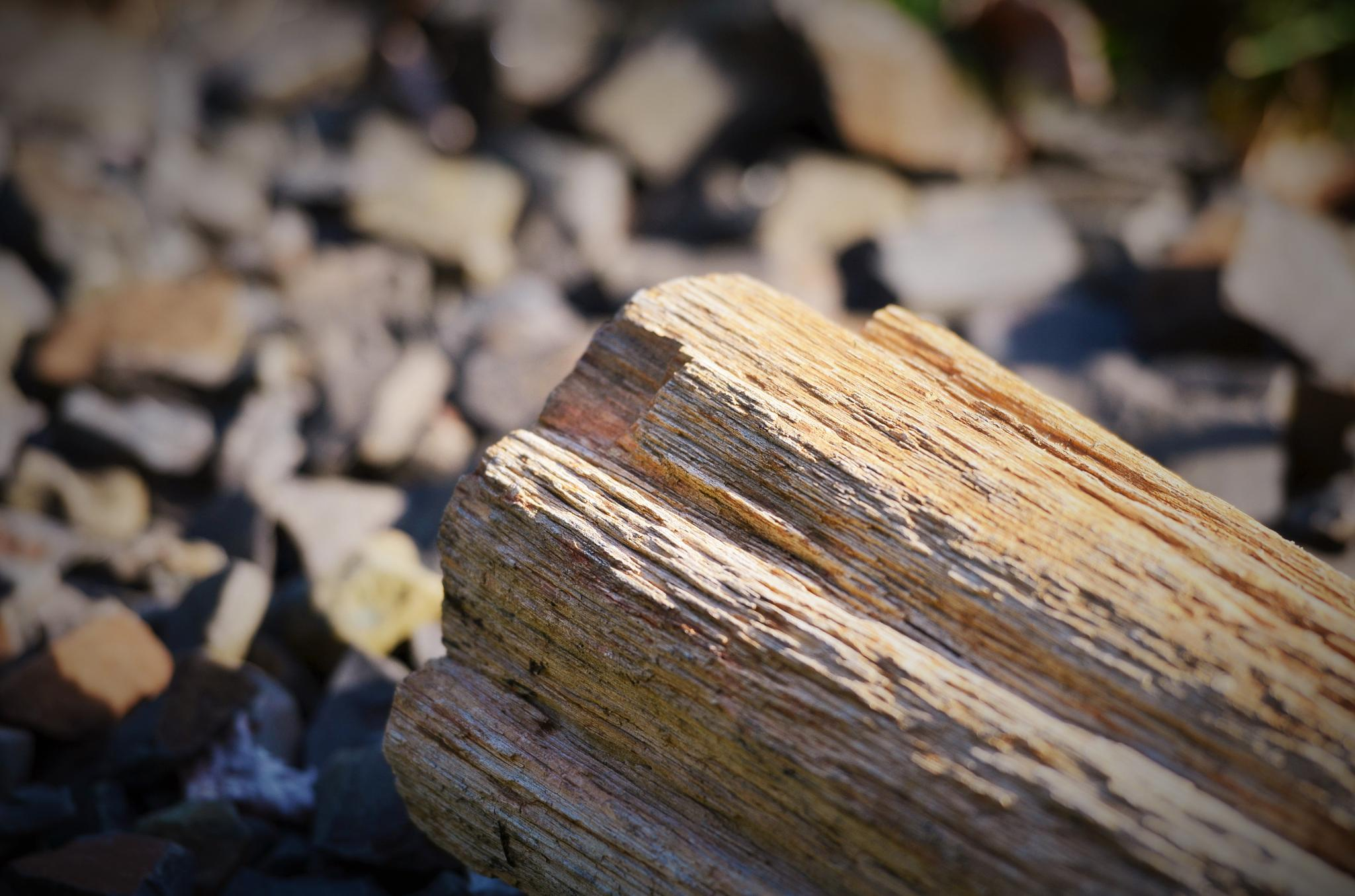 Petrified Wood by Boonietunes