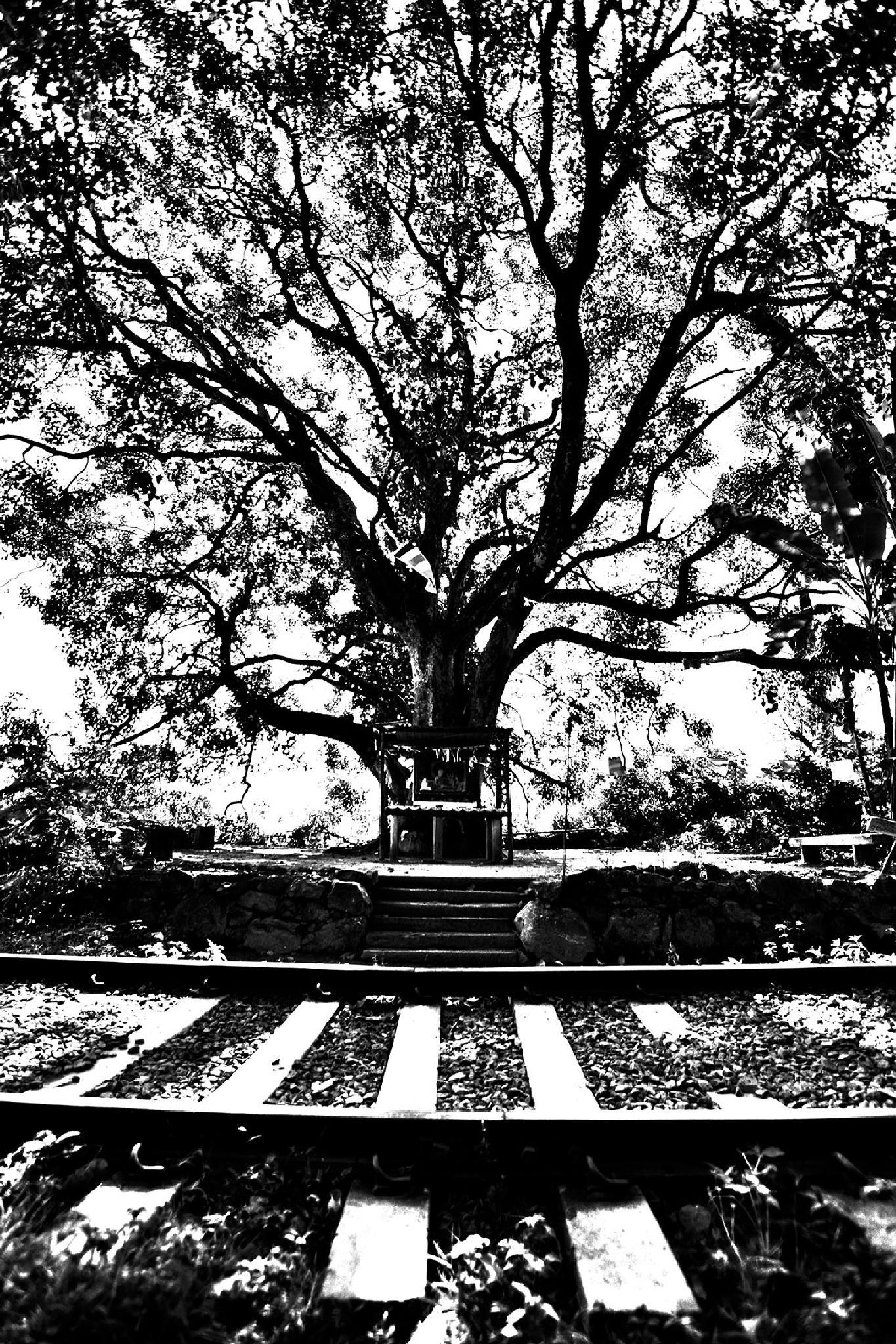Photo in Black and White #sri lanka #tree #nature #holy tree #black and white