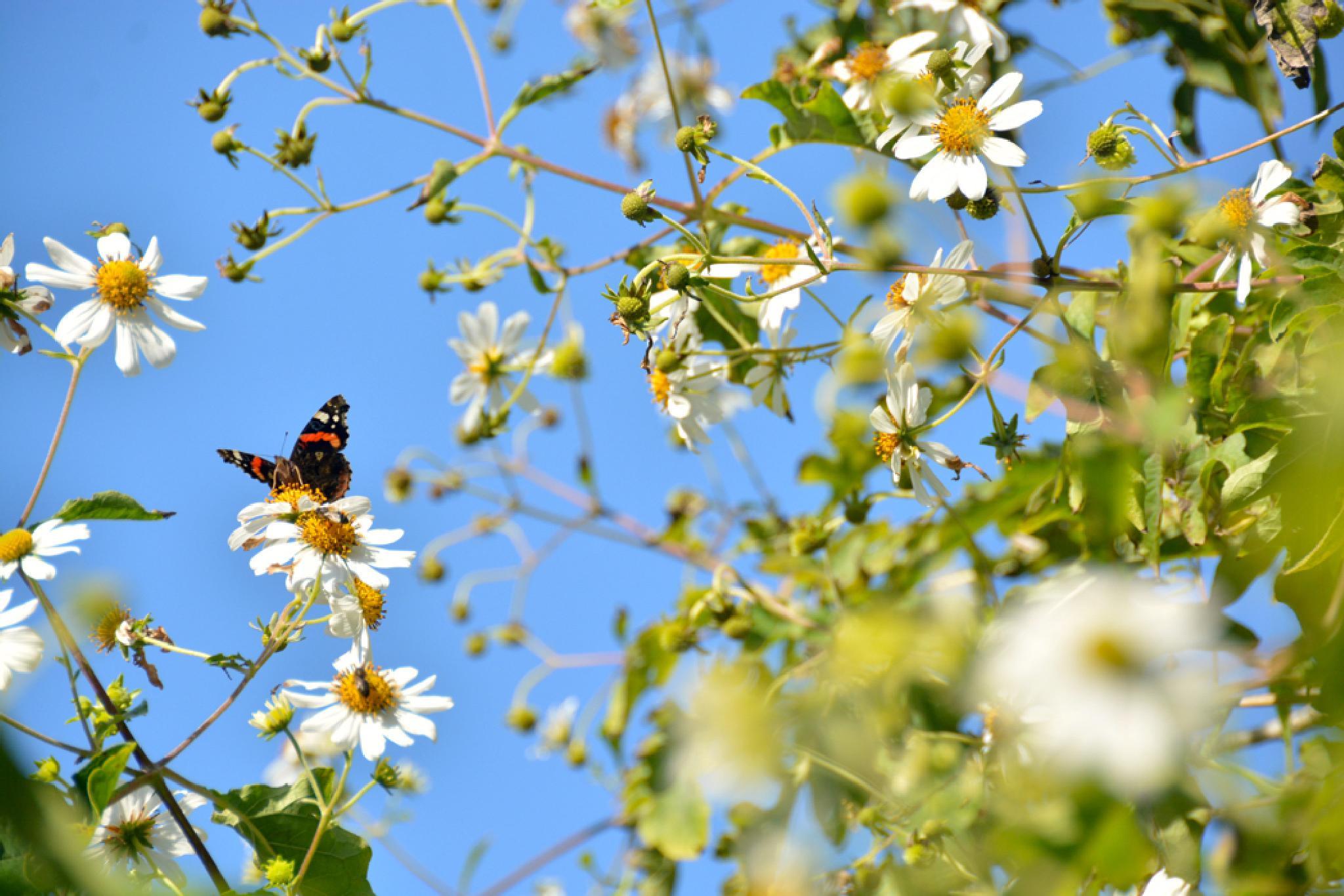 papillon by H.Abdellah