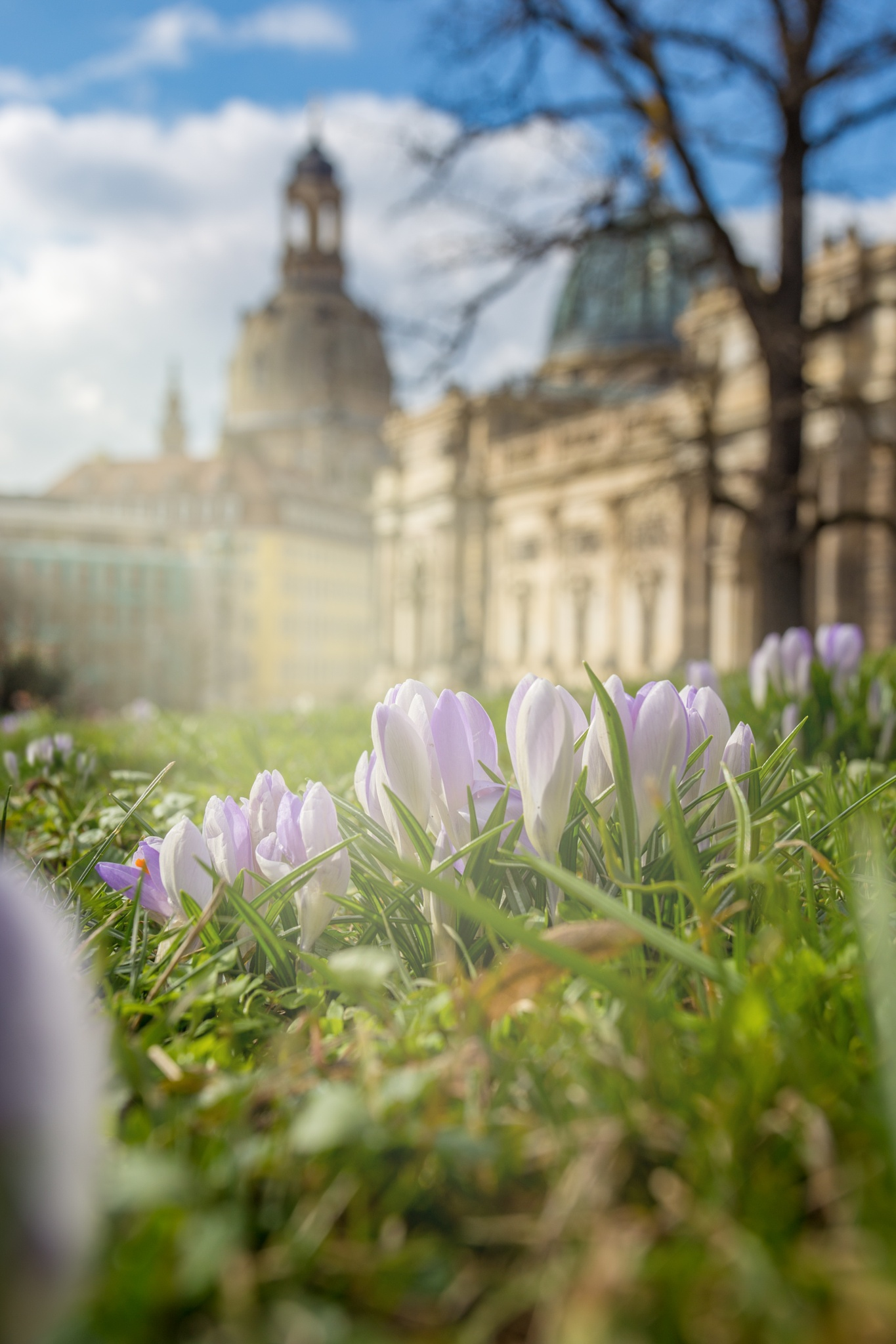 Frühling in Dresden by S.Rose Fotografie