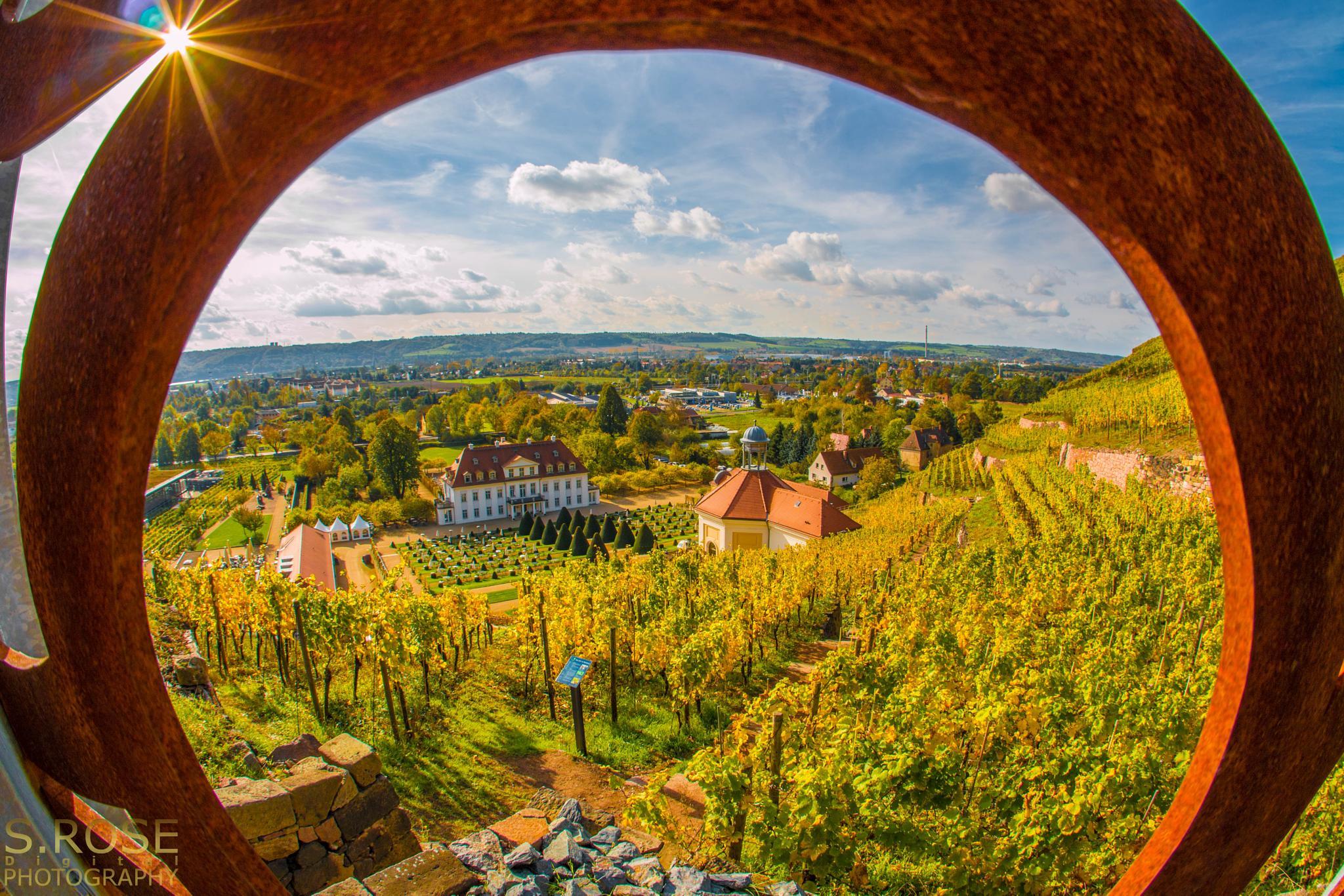 Autumn - Schloss Weingut Wackerbarth by S.Rose Fotografie