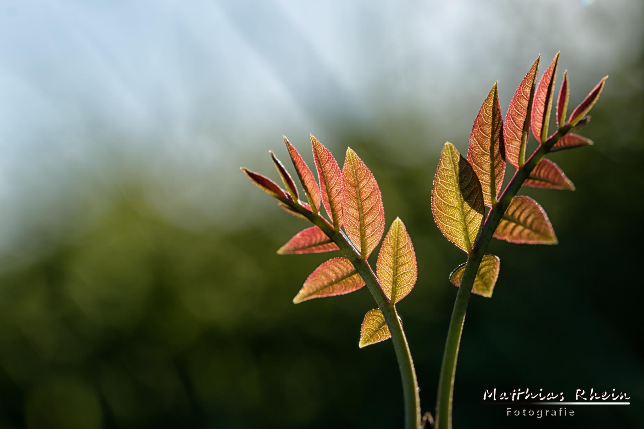 Minimal nature. by MatthiasRhein