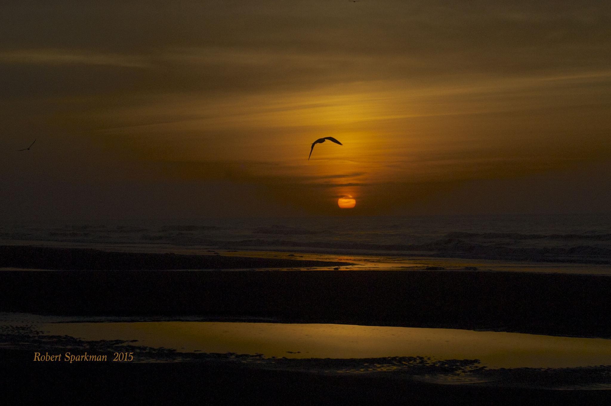 Some Bird by robert.sparkman