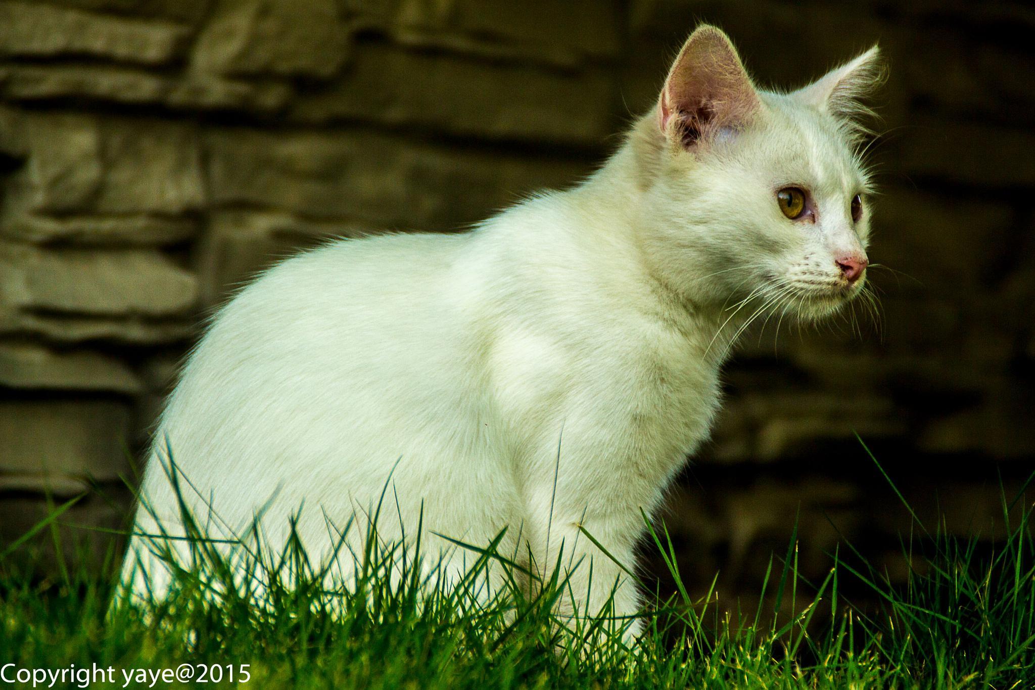Putih by yaye
