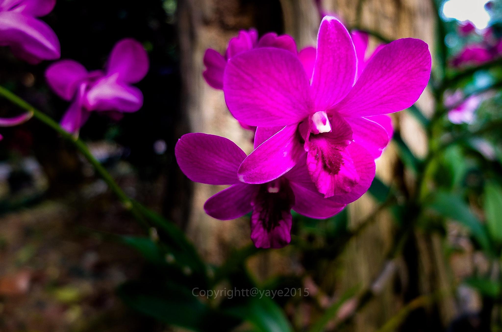 Blossom by yaye