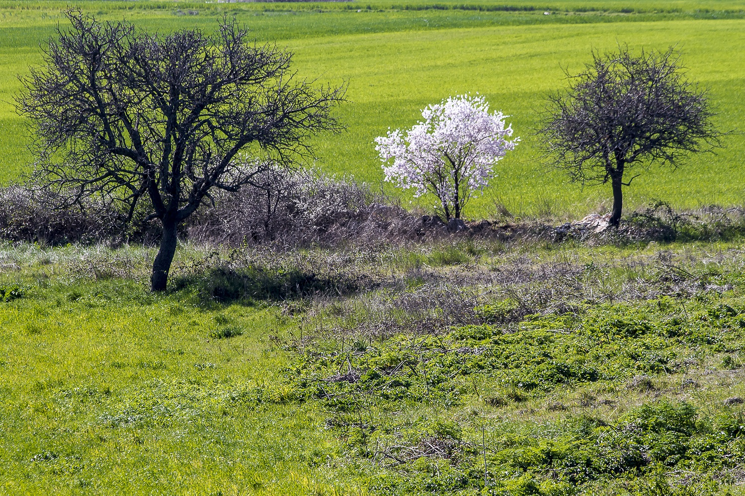 Murgia national park 2  by giuseppe.schiavone.338