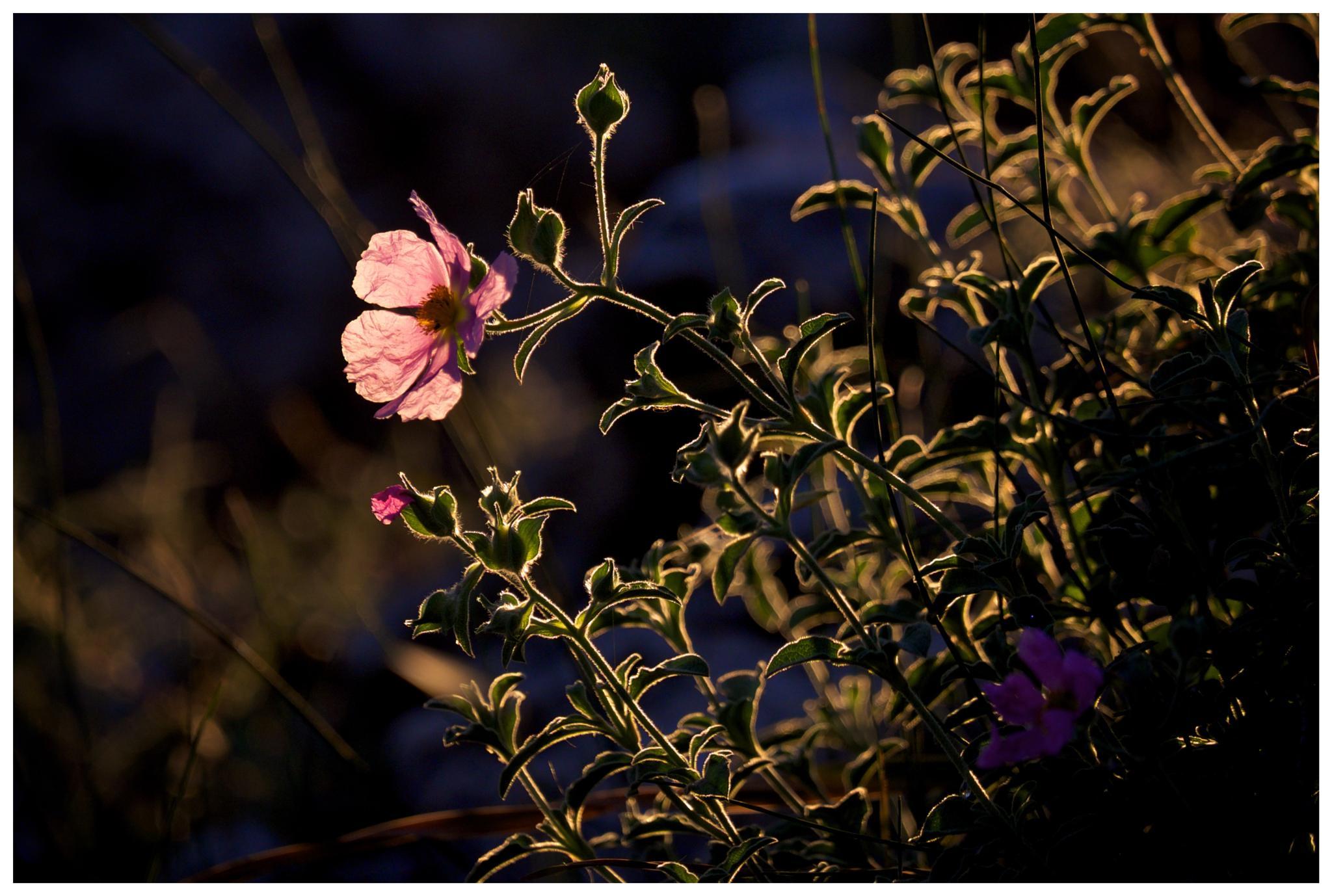 Forest flowers by David Plotnikov
