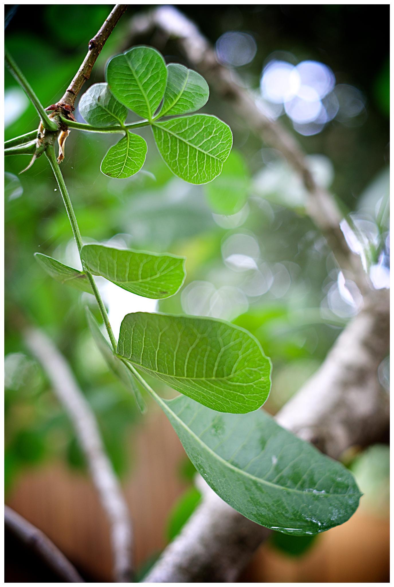 The leaf by David Plotnikov