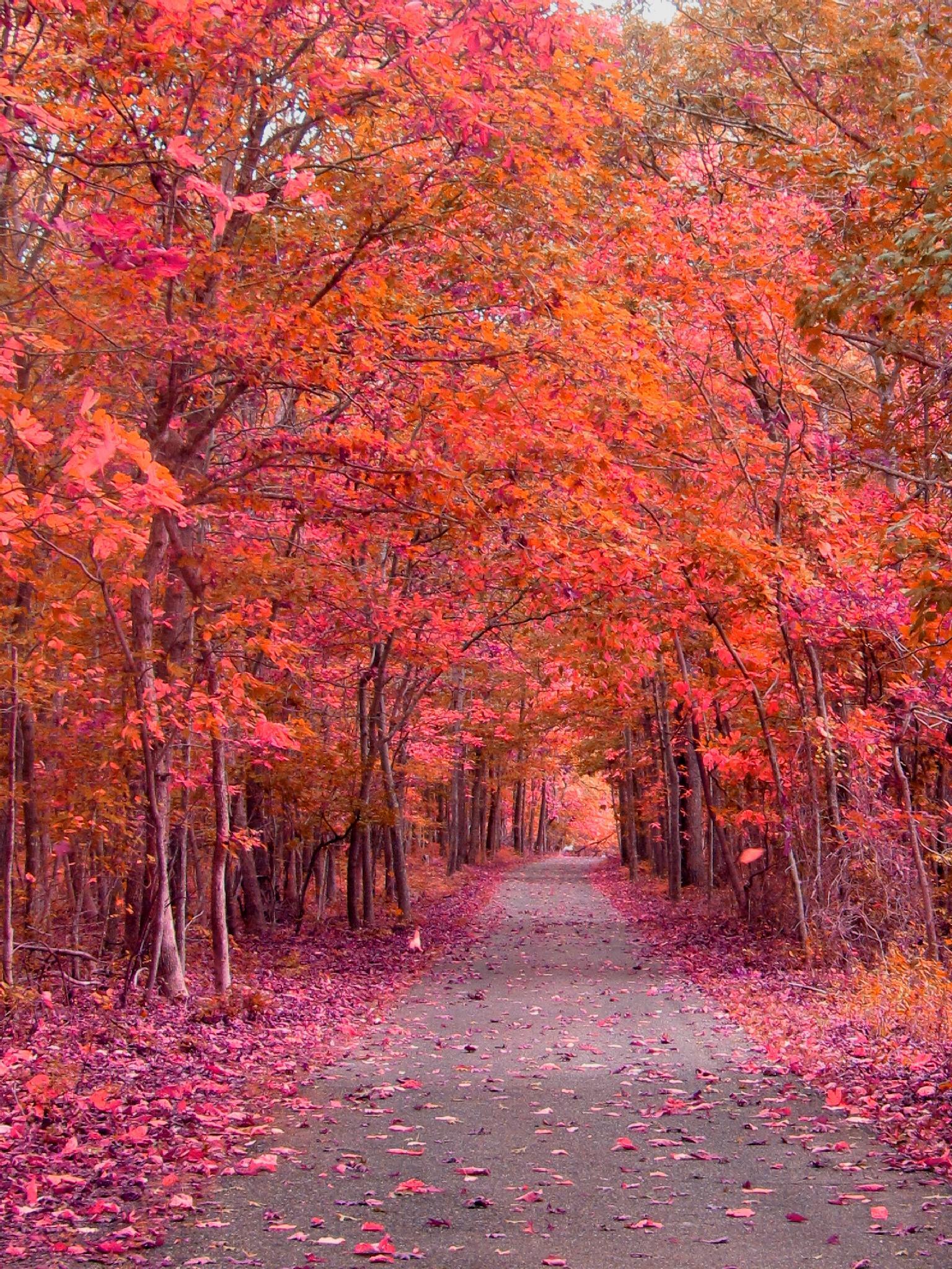 Purple Autumn by constance carlsen