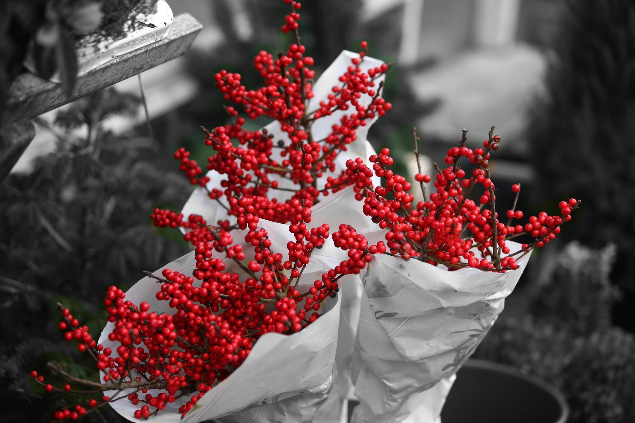Blomster by Mogens Petersen
