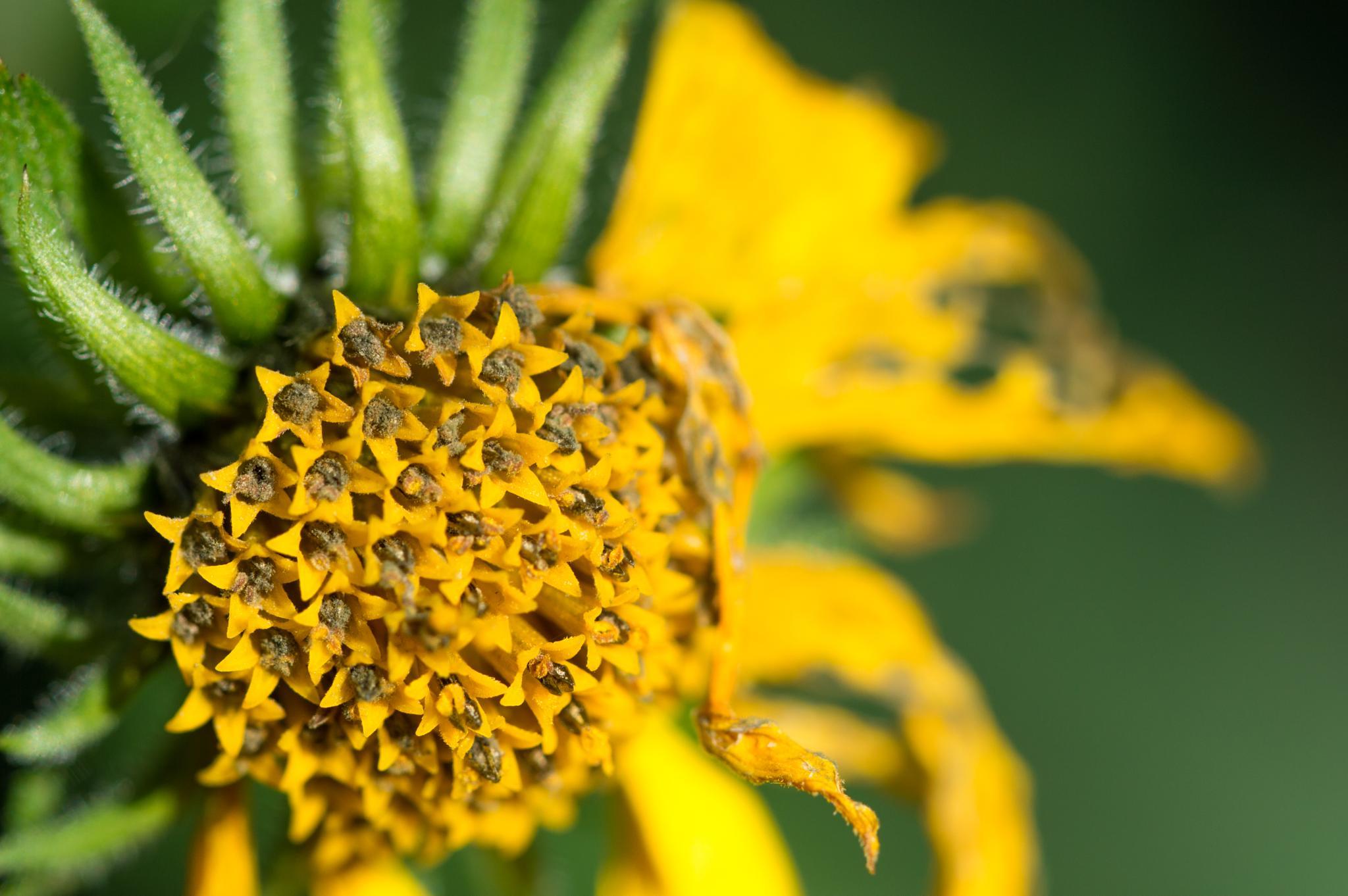 Dying flower by Floris Engelmann