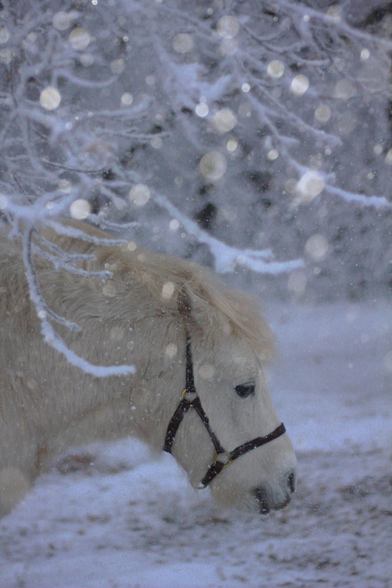 Winter Wonderland by nancy.makowecki