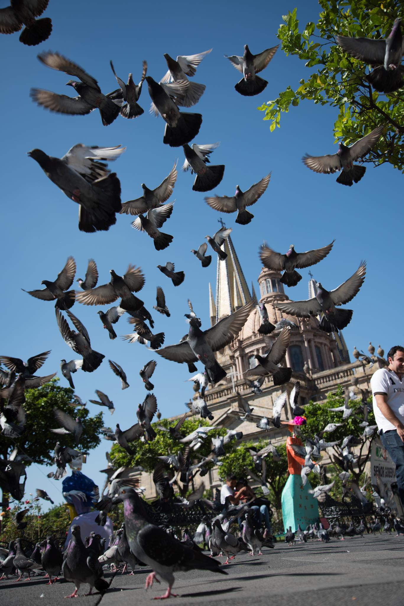 Photo in Street Photography #guadalajara #doves #cathedral