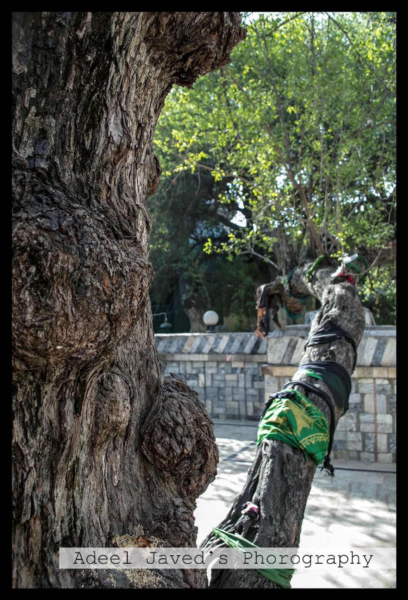 Tree View by Adeel Javed