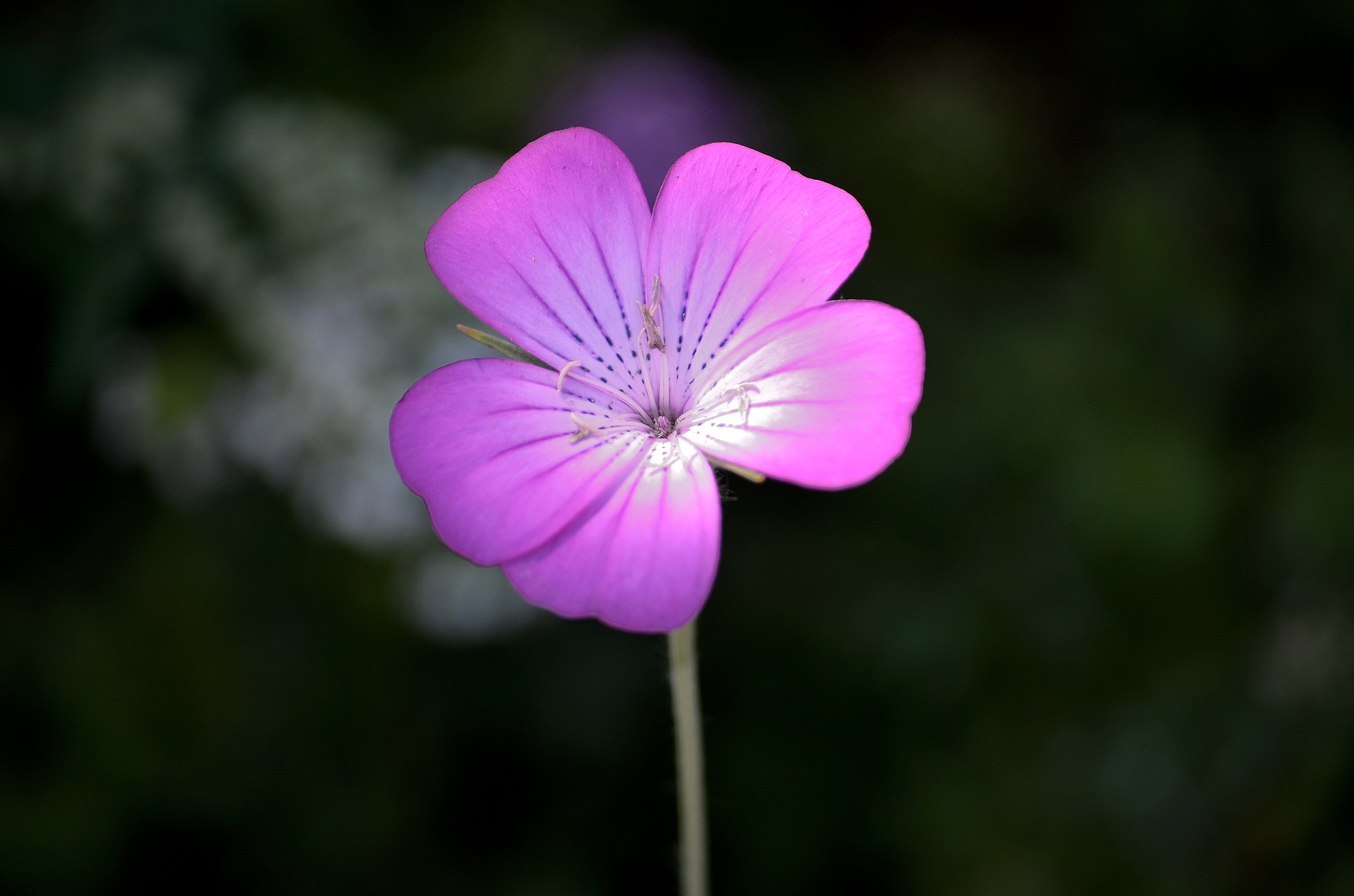 Lone flower by AndyWaters