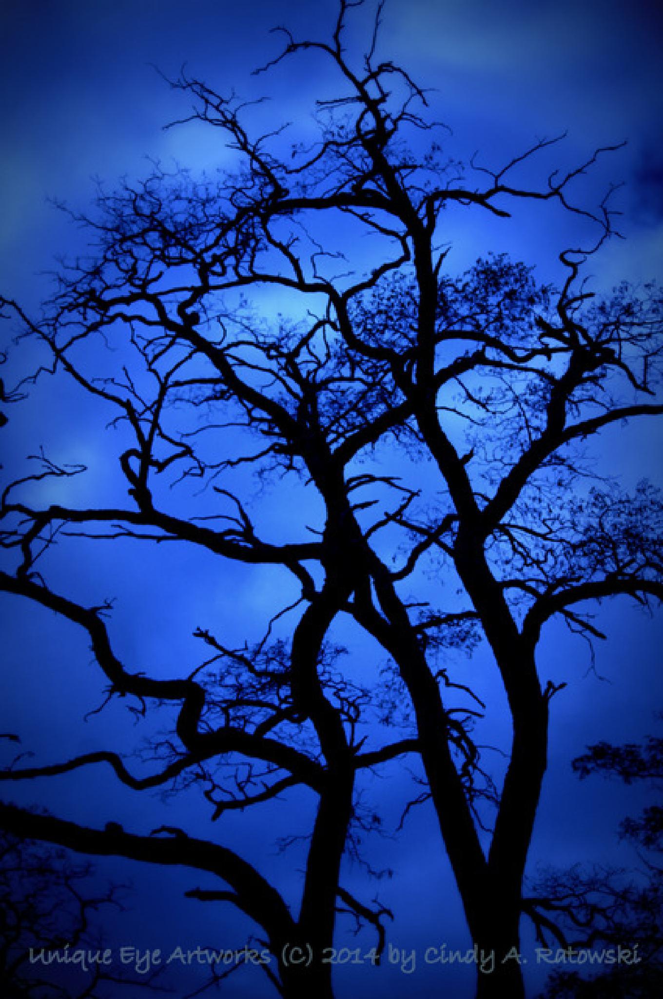 Locus Trees  by cindyaratowski