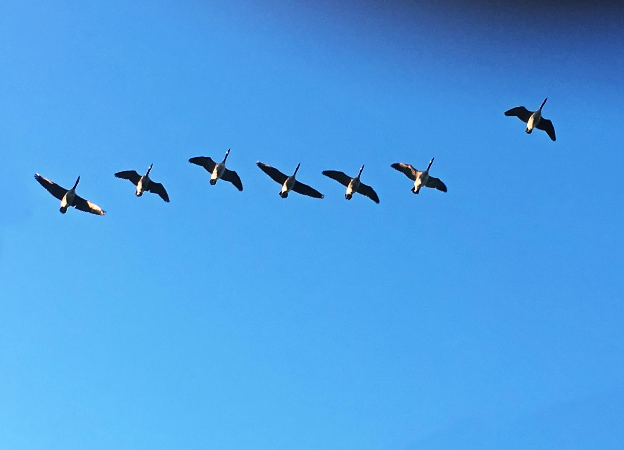 A flight by Luba