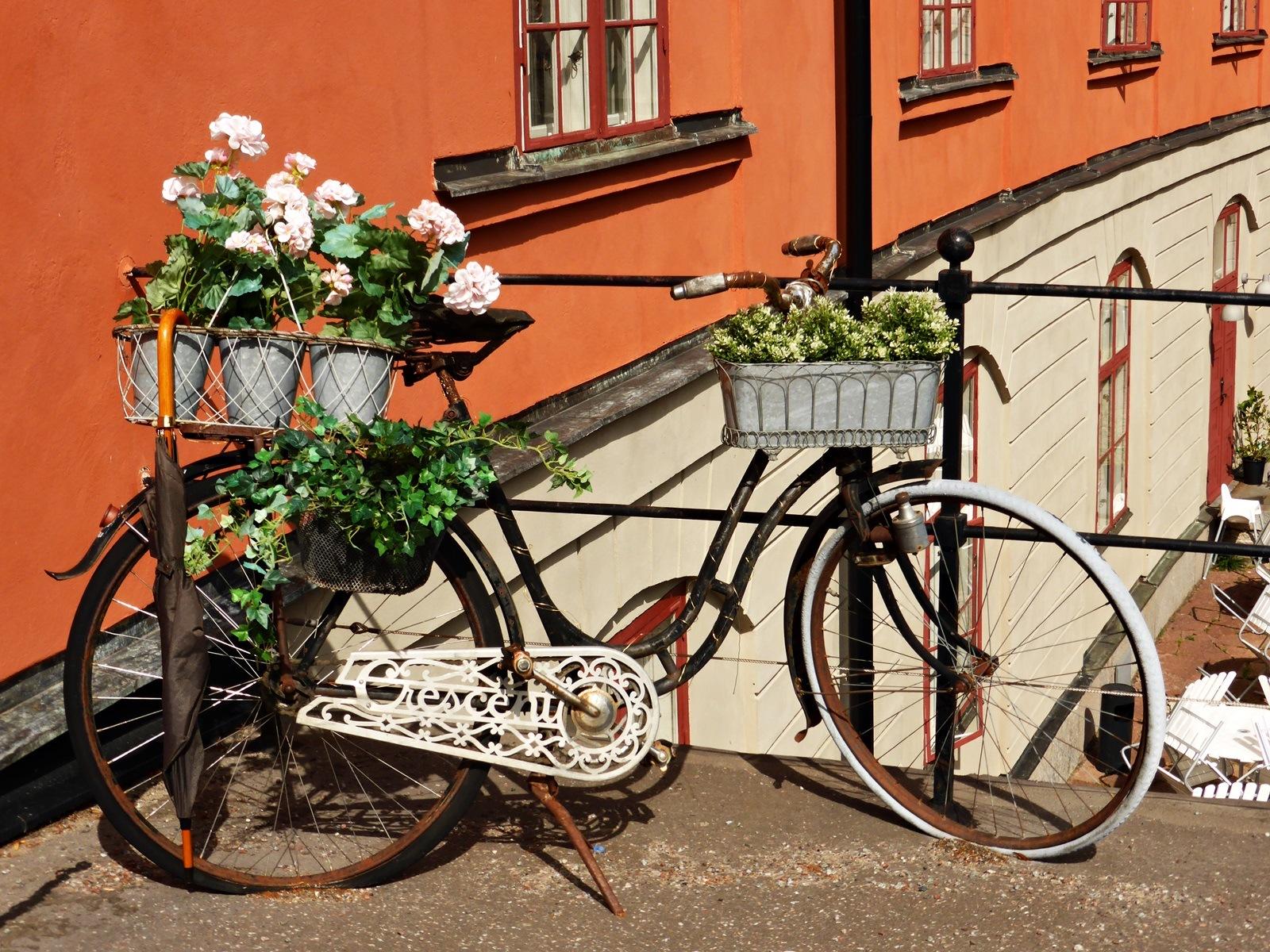 Flower bike by Luba