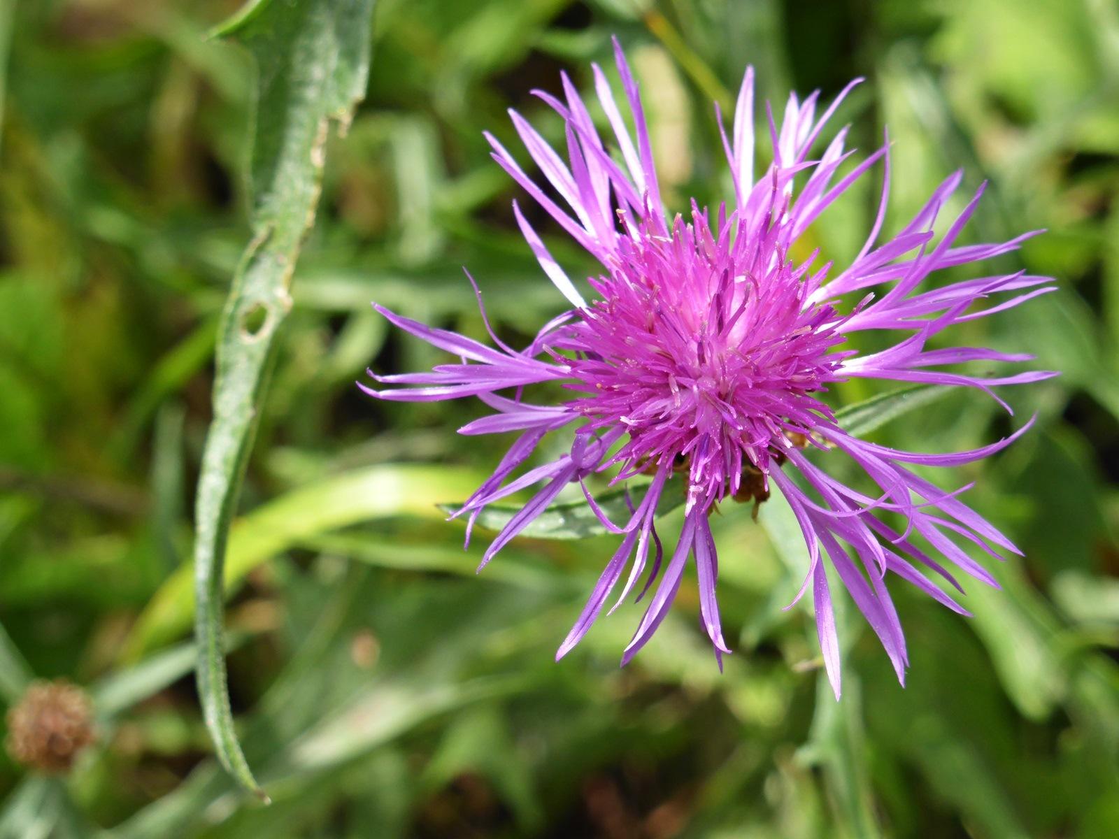 A flower by Luba
