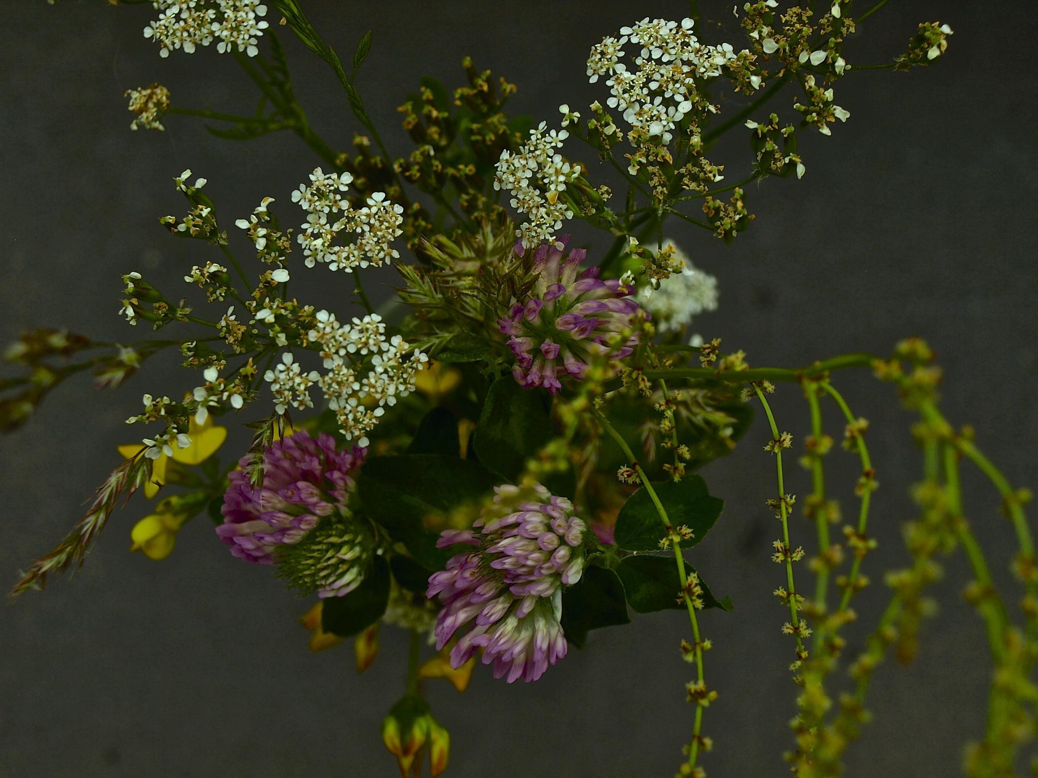 wild flowers by lisbeth.westergaard