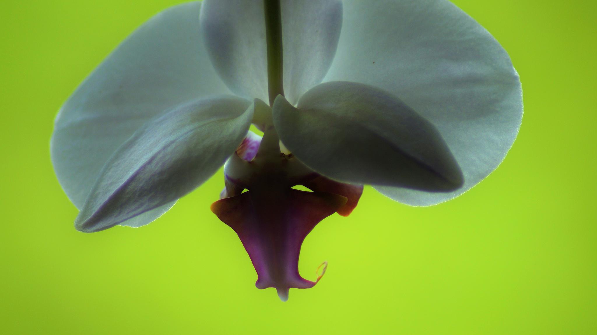 Orchide by lisbeth.westergaard