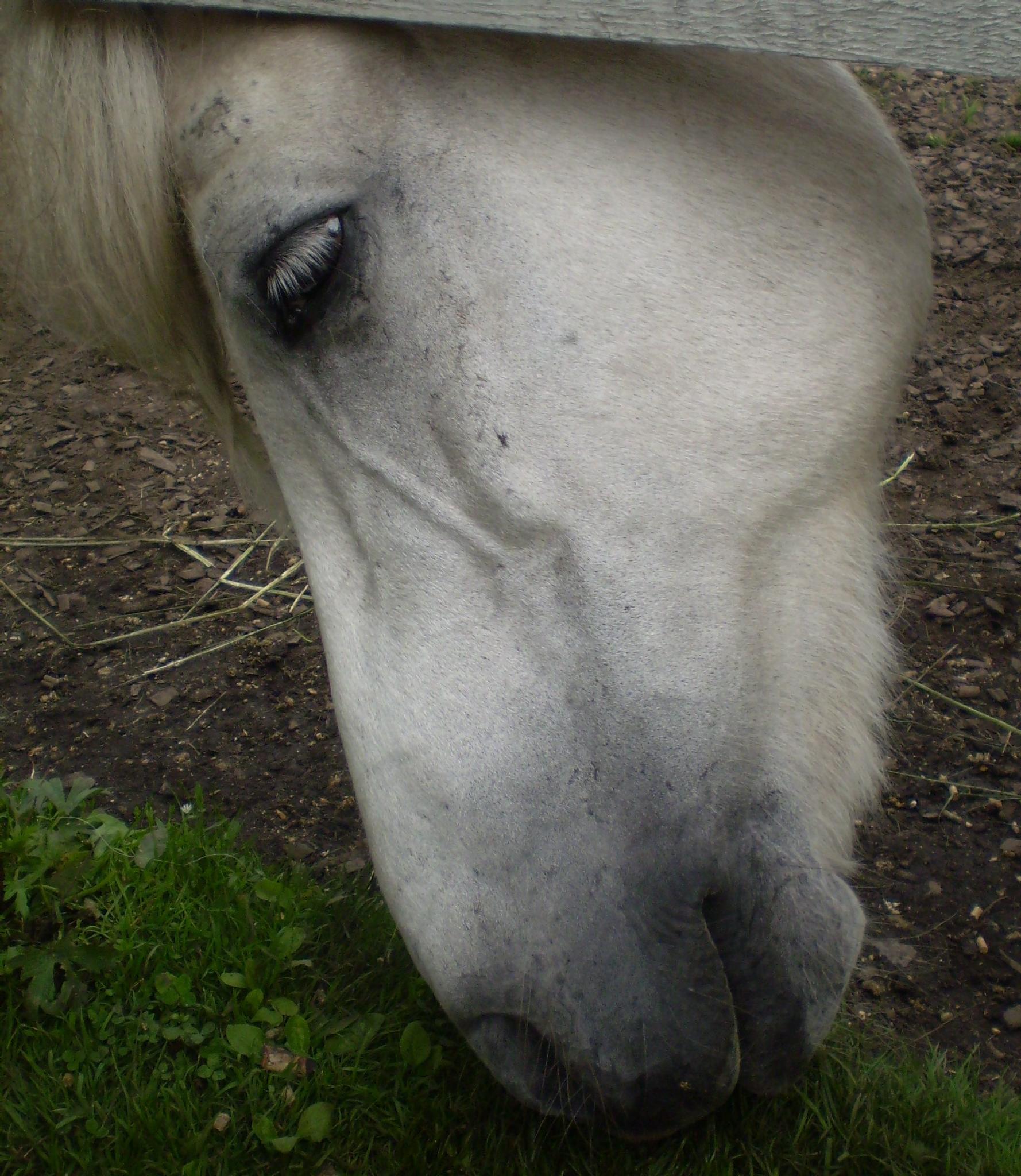 Horse by lisbeth.westergaard