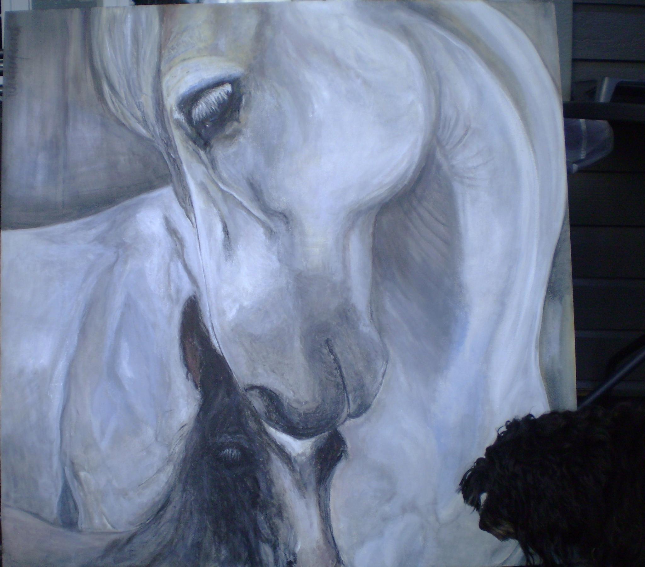 reidar dog meet my horse by lisbeth.westergaard