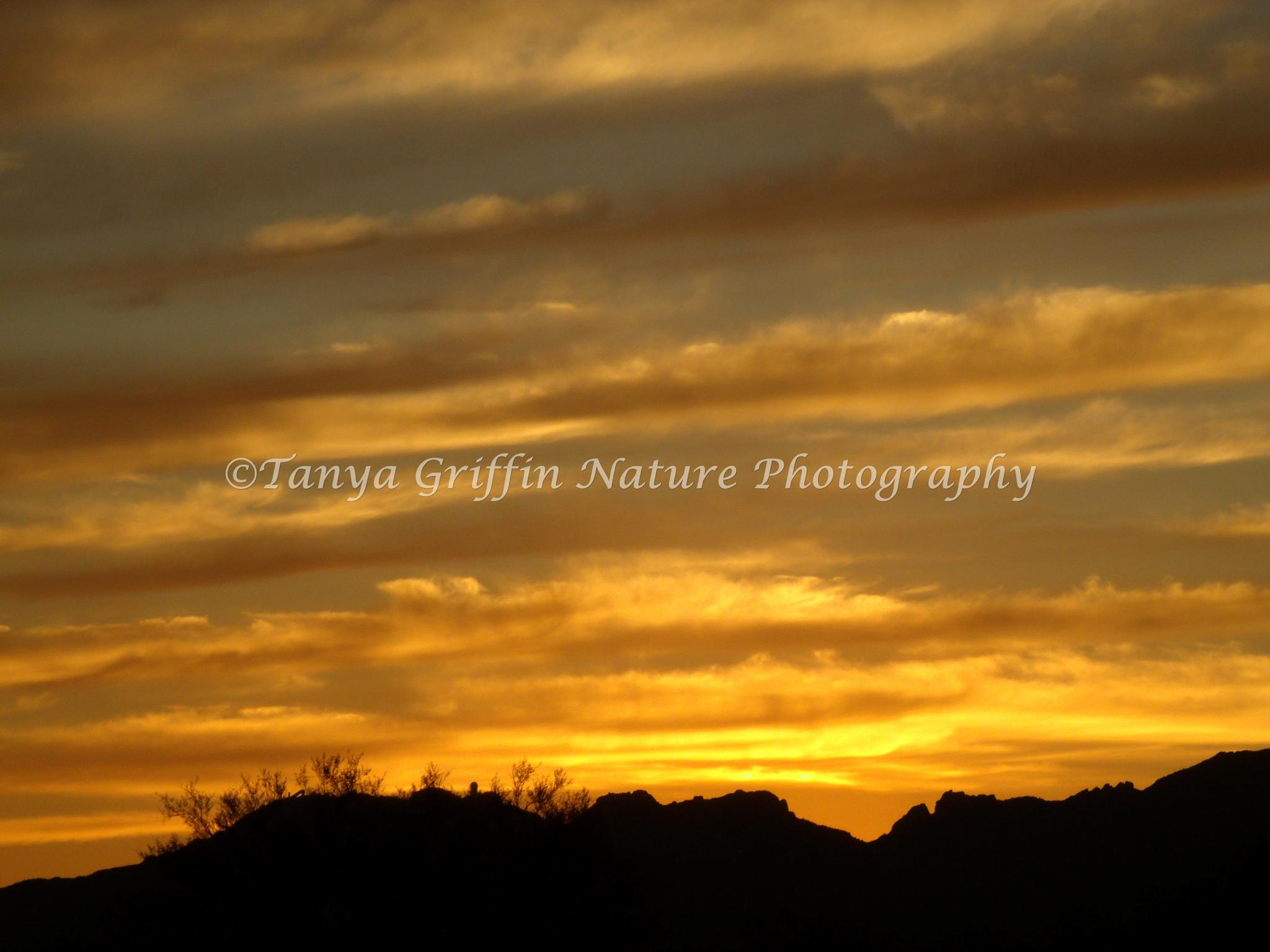 Arizona Sunset by tanya.griffin.737
