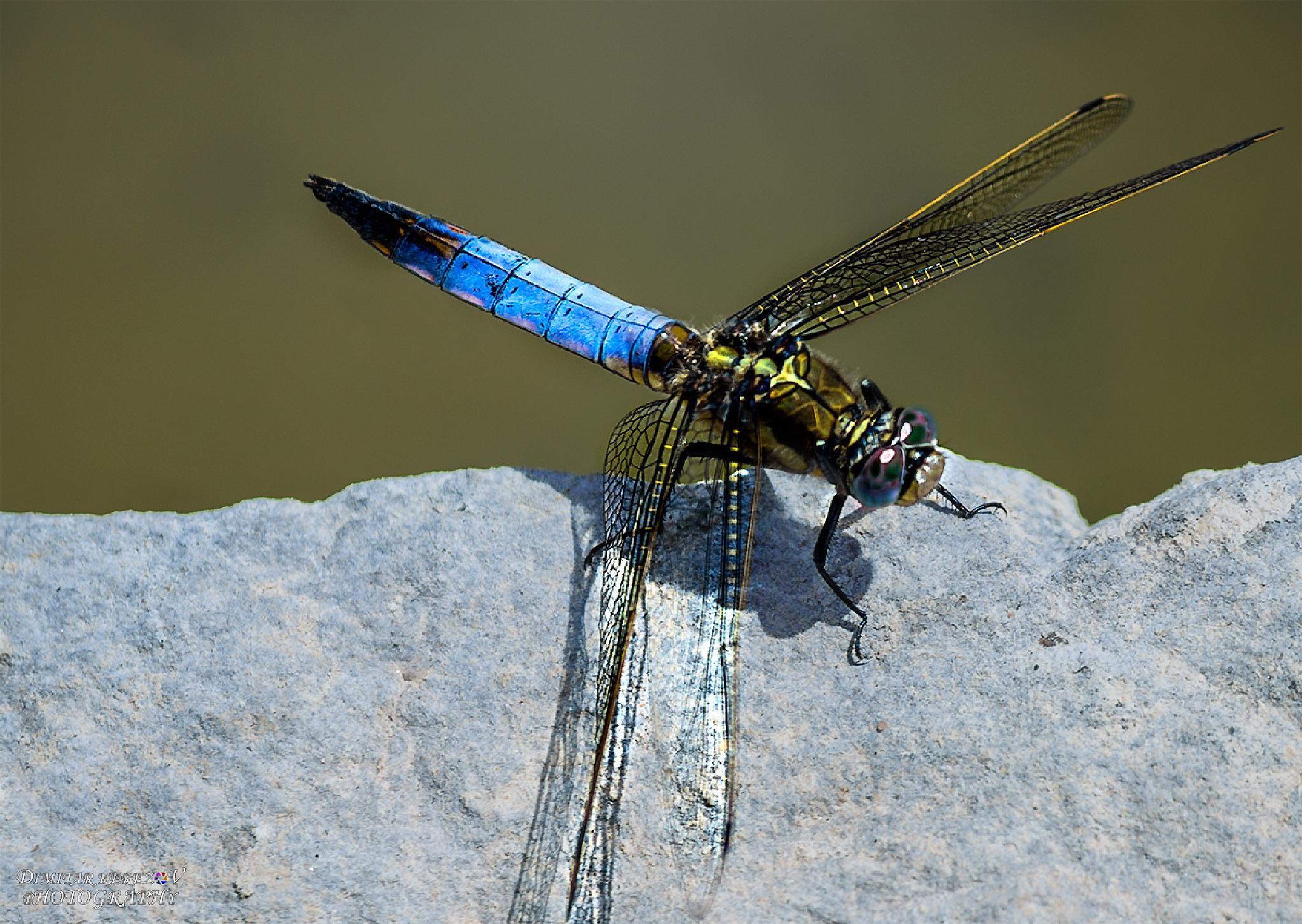 Photo in Macro #macro #insect