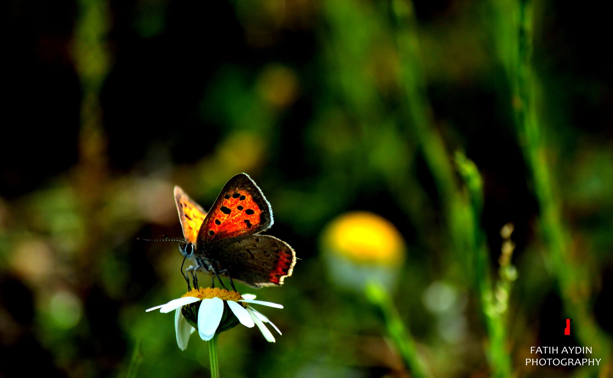 Butterfly by FATİH AYDIN
