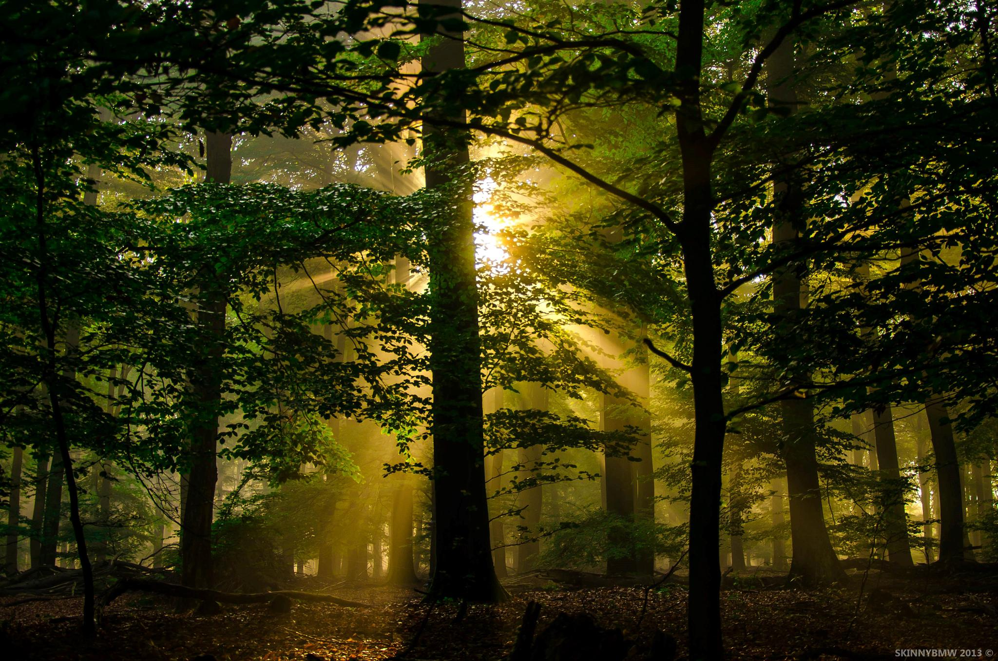 Photo in Landscape #forest #autumn #tree #trees #sun #light