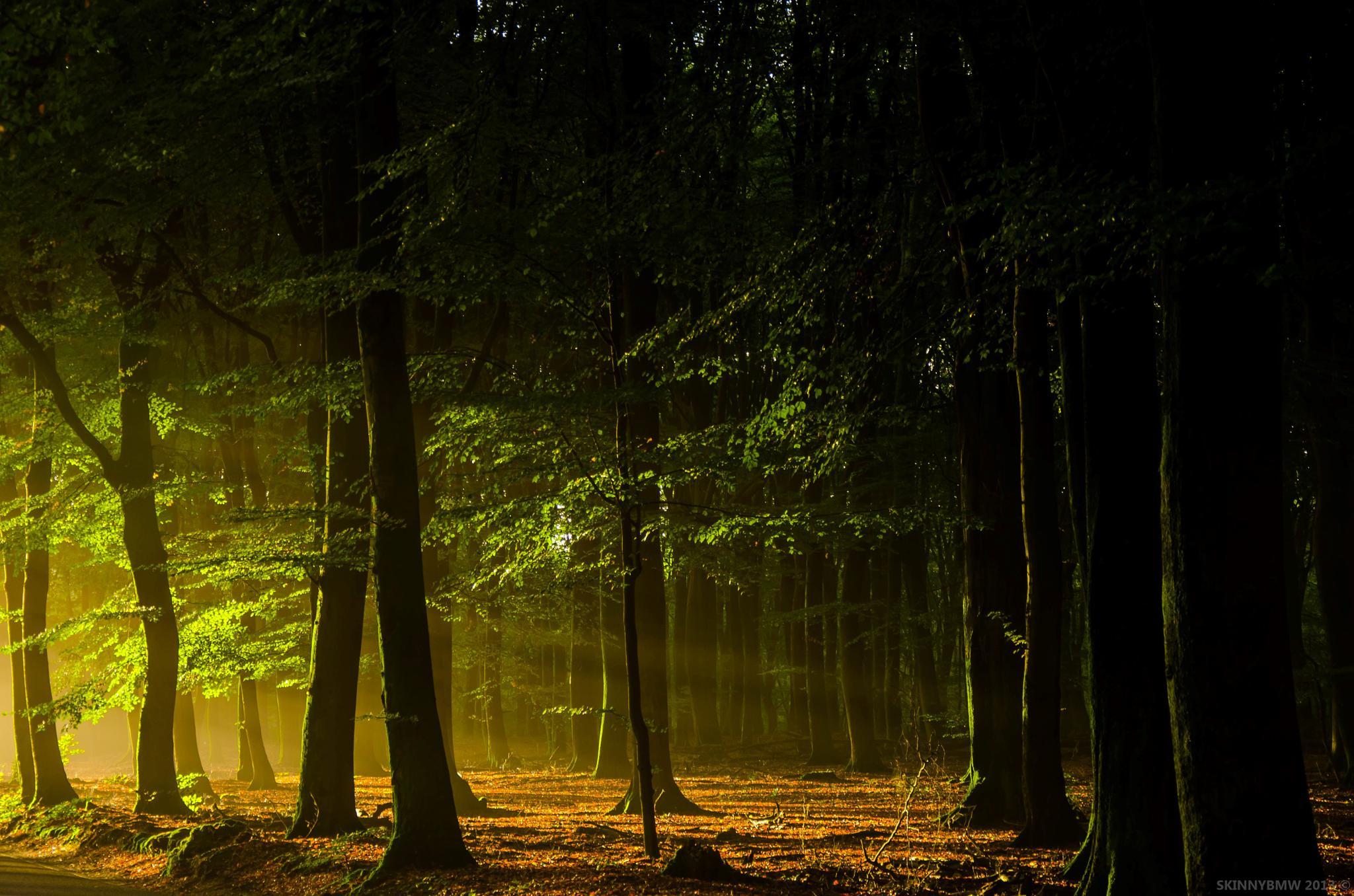 Dark morning with Sun by Pieter Jan Nagel