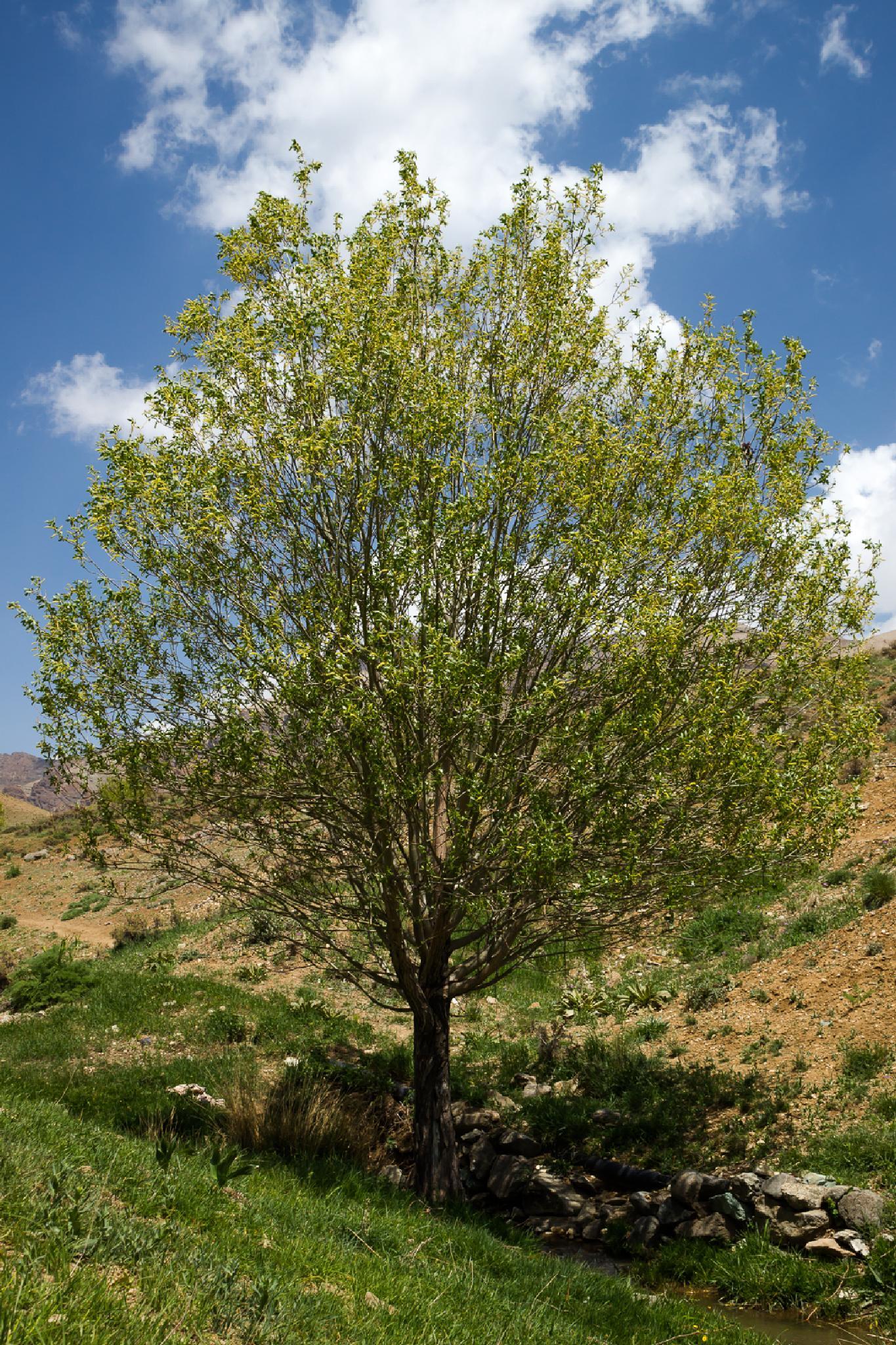 The Tree by Mohammad Farahani
