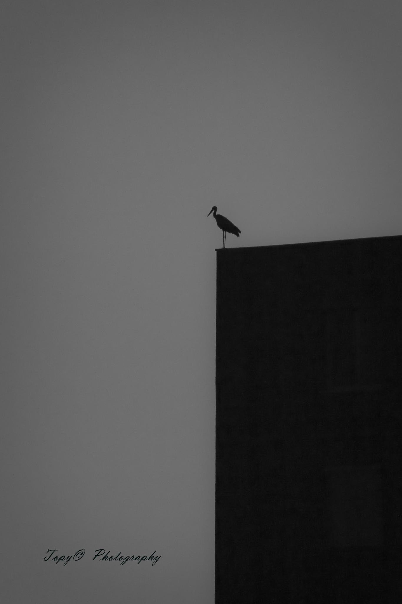 Photo in Animal #bird #dark